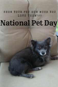 National Pet Day!